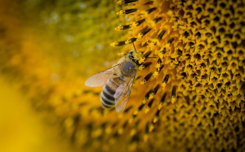 Mật ong từ xa xưa đã được biết đến là rất tốt cho sức khỏe